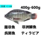 鲫鱼 罗非鱼 非洲鲫鱼